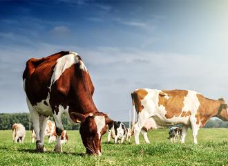 Sữa từ bò ăn cỏ